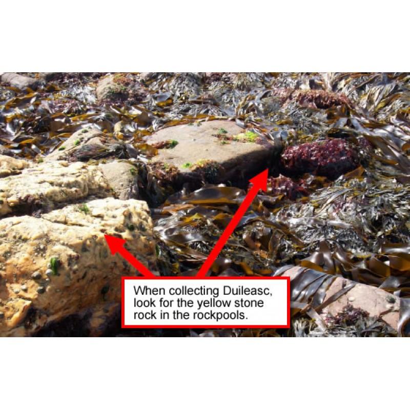 Achill's Hidden Garden - 'Edible Seaweeds'